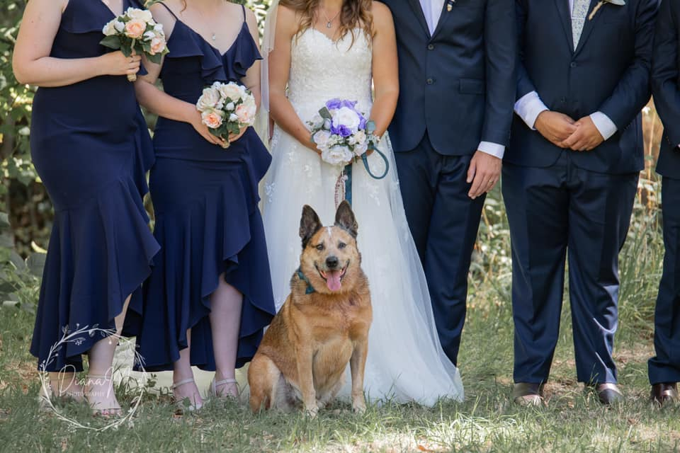 adelaide weddings with pets